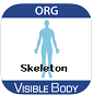 Visible Body Skeleton Premium